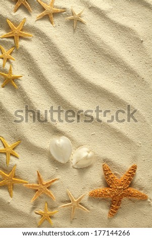 Sea stars and sea shells  on white  sand background still life