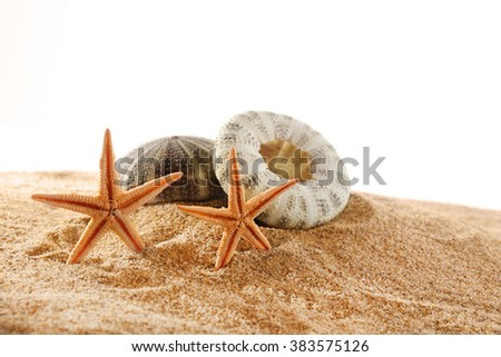Sea stars and shells on sand isolated on white background - stock photo