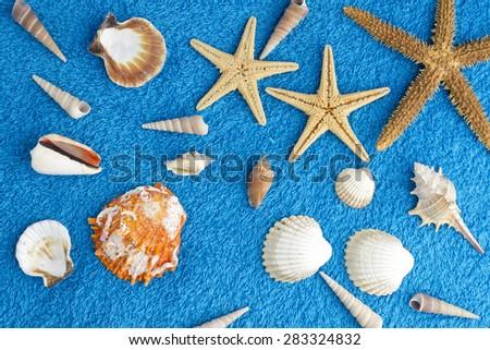 sea stars background  - stock photo