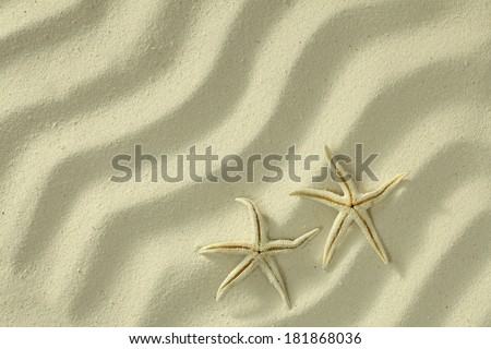 Sea stars on white sand background, full frame