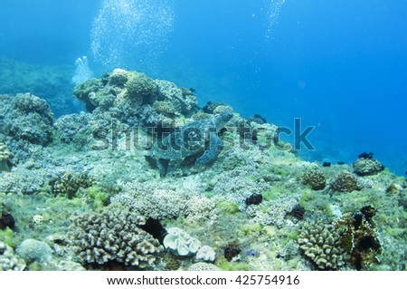Sea turtle and coral reef - stock photo