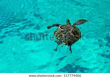 Sea Turtle at Similan Island, Similan Islands National Park, Phang Nga, Thailand - stock photo