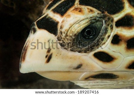 Sea Turtle Close Up - stock photo