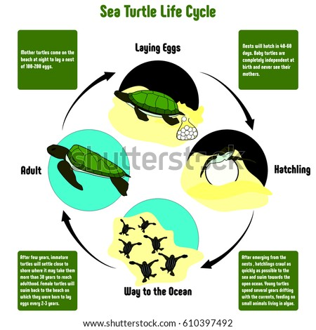 vector plant life cycle stock vector 108950384 shutterstock Dog Knee Diagram