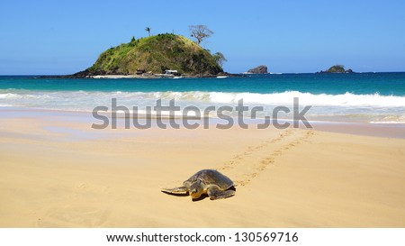Sea turtle on Nacpan beach. El Nido - stock photo