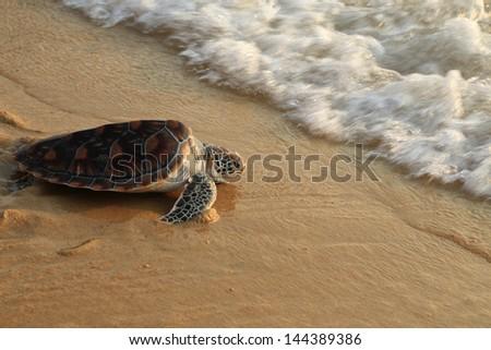 Sea turtle release. - stock photo