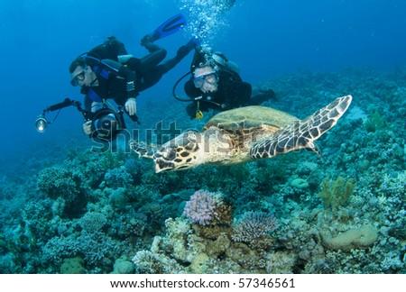sea Turtle, scuba divers and underwater photographer - stock photo
