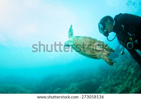 Sea Turtle swimming under the sea with diver. - stock photo