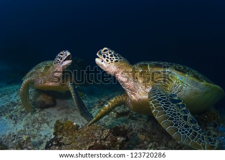 Sea turtles on the coral reef underwater on blue water background - stock photo