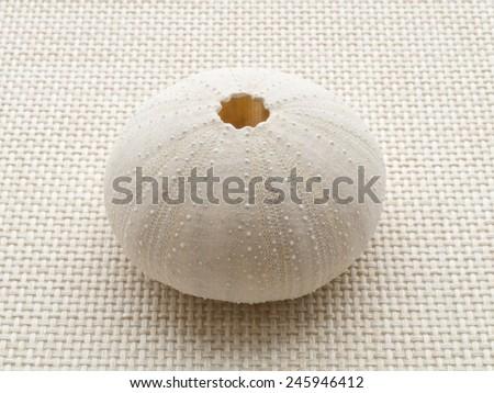 Sea urchin skull on the weave fabric close up - stock photo