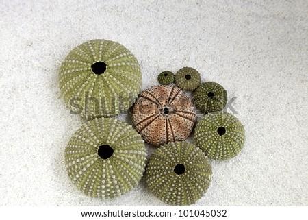 sea urchins on the beach - stock photo
