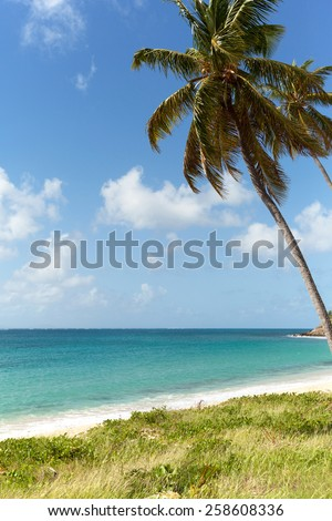 sea view in Antigua with palm trees - stock photo
