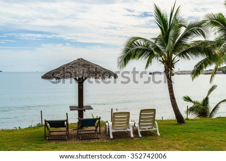 sea view with little coconut tree