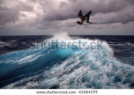 sea wave and seagull - stock photo