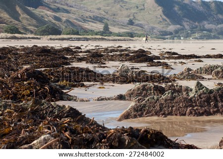 sea weed washed ashore in bundles on a beach in Gisborne, East Coast, New Zealand  - stock photo