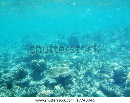 Seabed of Maldives - stock photo