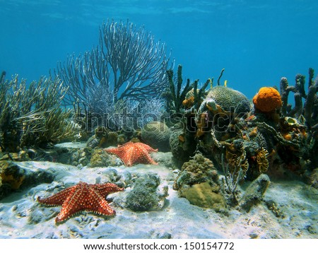 Seabed with coral and starfish under water
