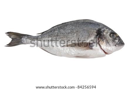 Seabream isolated on white - stock photo
