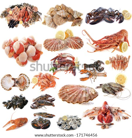 seafood and shellfish in front of white background - stock photo