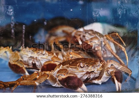 seafood at the fish market in the aquarium - stock photo