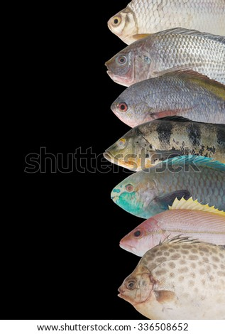 Seafood background, fish collection isolated on black - stock photo