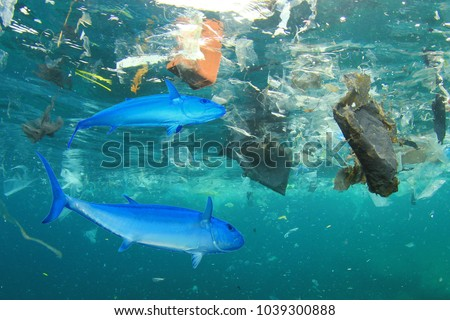 Seafood contamination - tuna fish in plastic polluted ocean environment