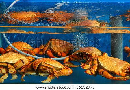 Seafood for sale in a tank outside a restaurant in Hong Kong - stock photo