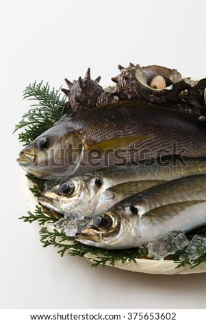 Seafood platter of fish