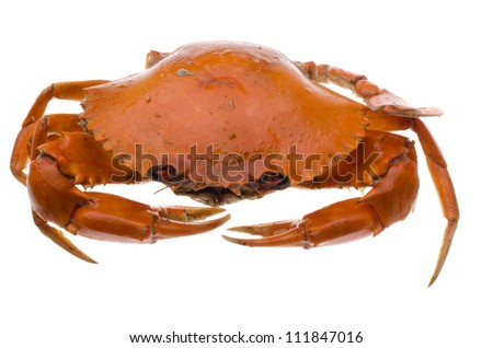 seafood red crab isolated on white - stock photo