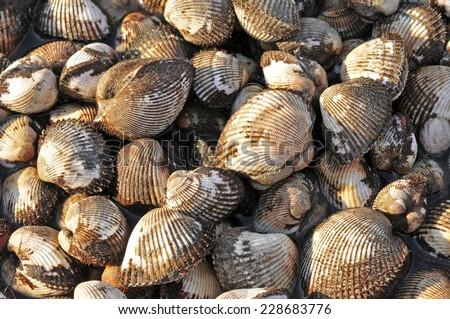 Seafood shellfish  - stock photo