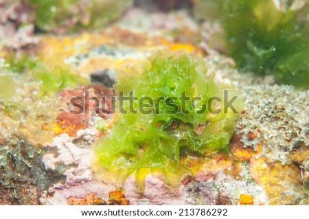 Seagrass underwater - stock photo