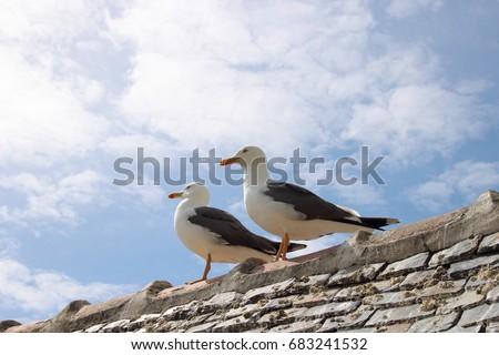 stock-photo-seagull-683241532.jpg