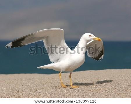 Seagull alighted on sand beach - stock photo