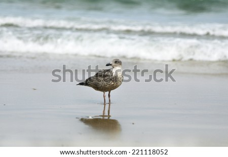 Seagull and Atlantic ocean - stock photo