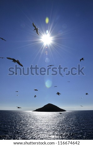 Seagull and island - stock photo