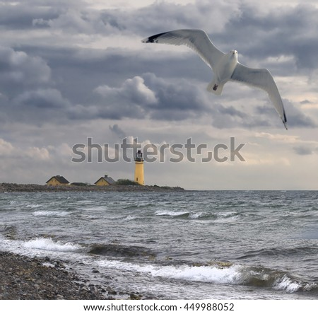Seagull and ocean
