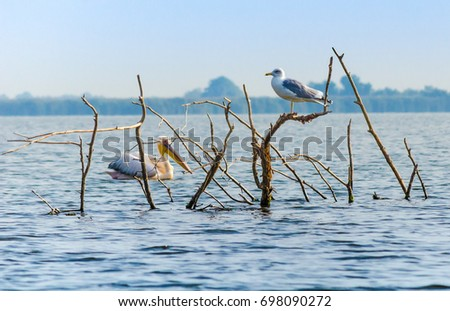 seagull and pelican in the middle of a lake
