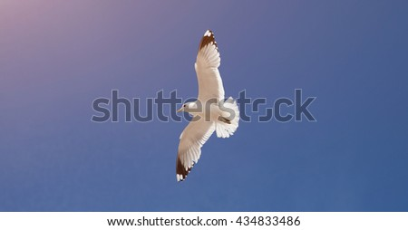 Seagull (close-up) flying in blue sky - stock photo