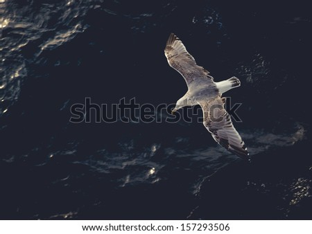 Seagull flying above the water. Tinted photo, low contrast - stock photo