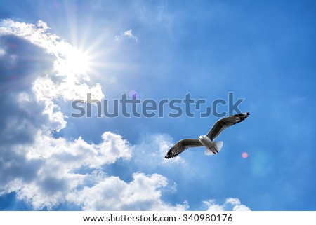 Seagull flying against blue cloudy sky with brilliant sun. - stock photo