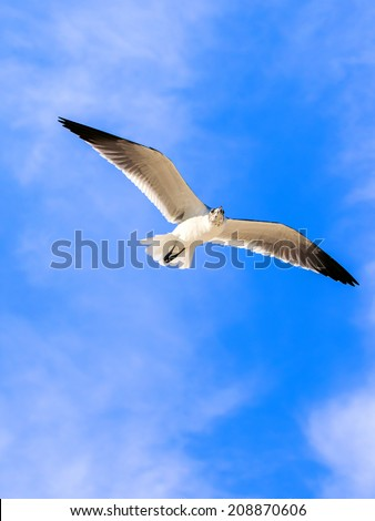 Seagull flying high against the background of blue sky - stock photo