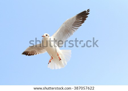 Seagull flying in beautiful sky