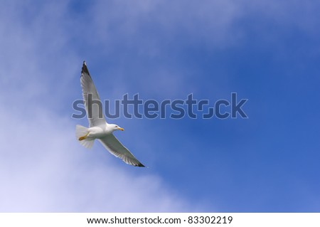 seagull flying in the blue sky - stock photo