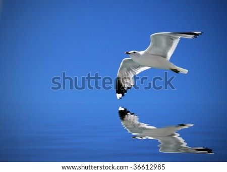 Seagull flying in the blue sky and reflecting in water - stock photo