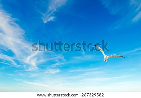 seagull flying in the blue sky with clouds - stock photo
