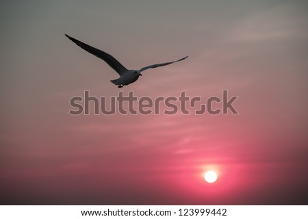 Seagull flying in the evening