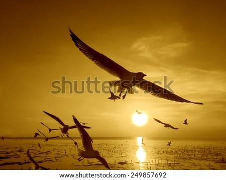 Seagull flying in the golden Sunset - stock photo