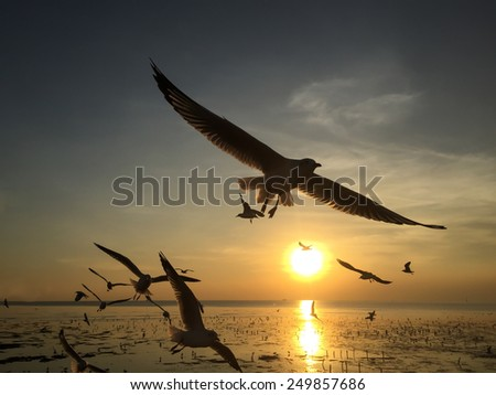 Seagull flying in the Sunset - stock photo