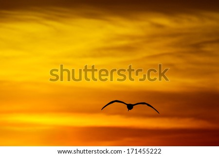 Seagull flying into beautiful golden sky in california. - stock photo
