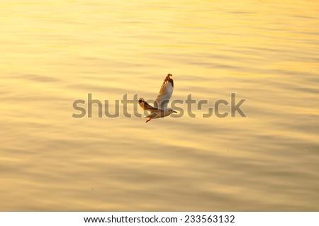 Seagull Flying Into the Sunset at Bangpu, Thailand - stock photo
